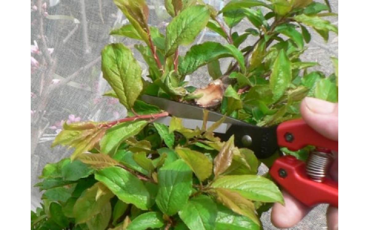 Выбор инструмента для флориста